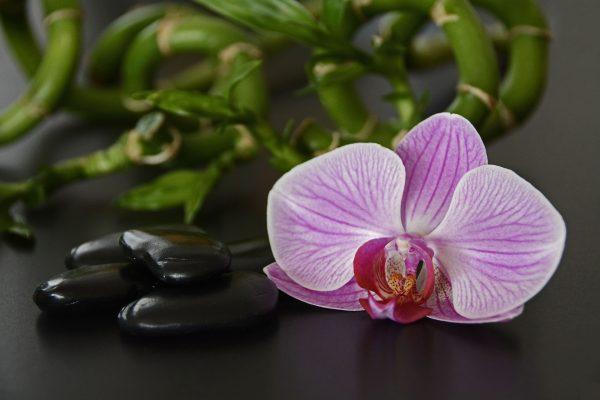 Hot Stone hoitoon käytettäviä kiviä ja orkidea